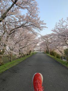 朝一桜トコトコモーニング!